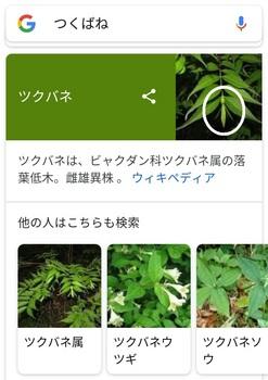 Screenshot_20180116-175232.jpg